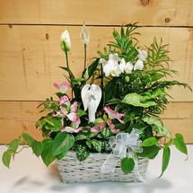 Garden of Angelic Peace (SCF9510)