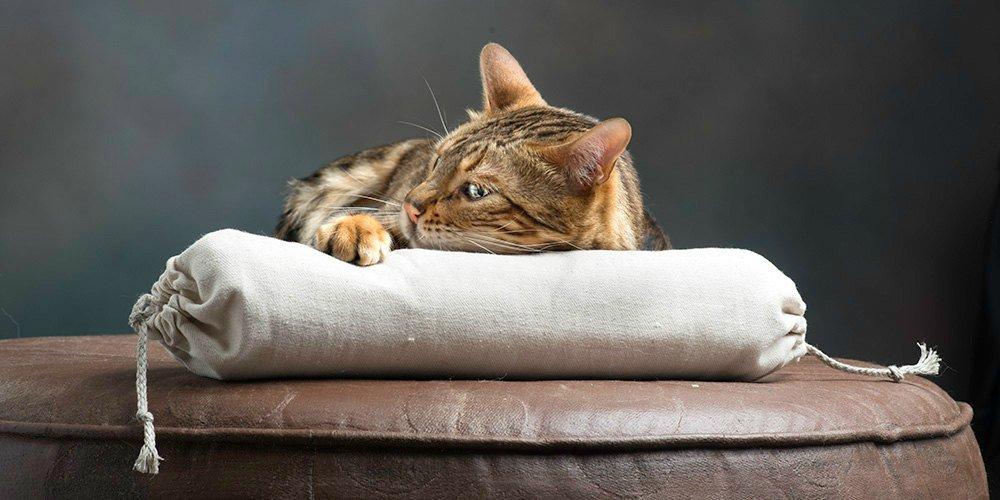 Brown cat with organic catnip snake