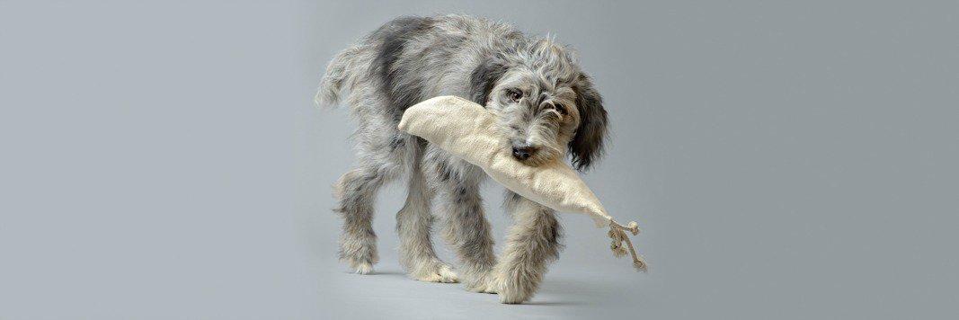 Large Dog with Hemp Dog Toy