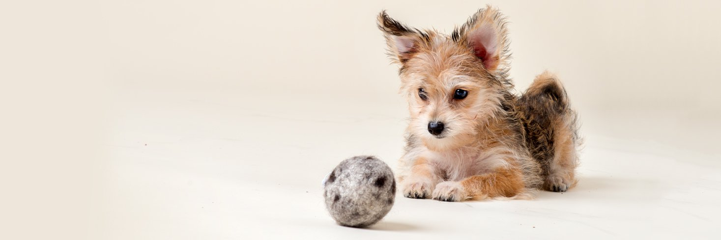 Puppy with handmade durable wool ball made in the USA