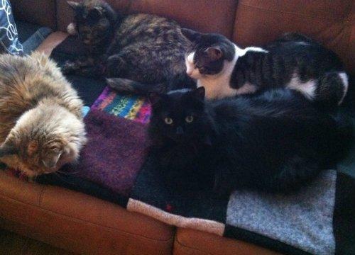 cats sleeping on cozy handmade wool blanket