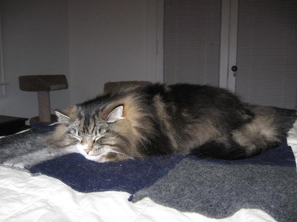 fluffy kitty sleeping on cozy handmade wool blanket