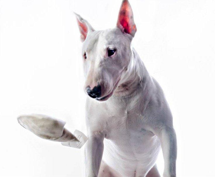 hempdogtoy-whitedog.jpg