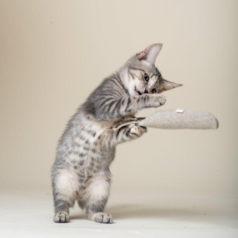 kittenwithhempcarrot1.jpg