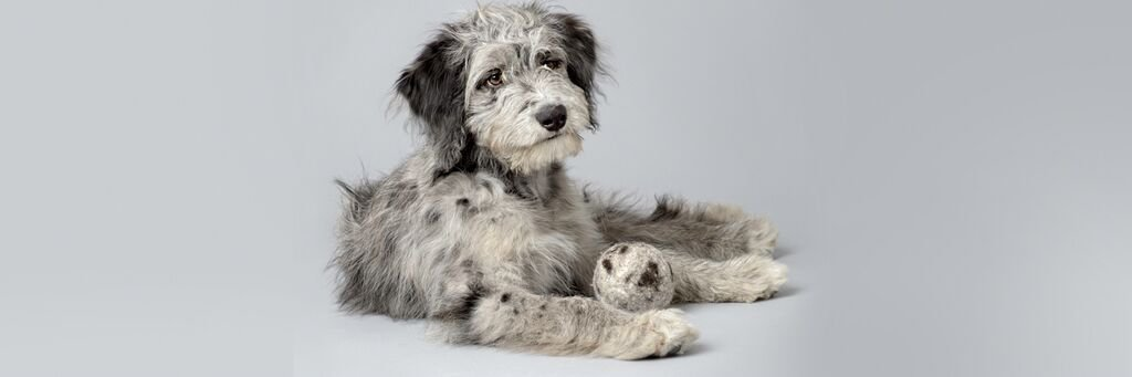 wooldogball-greydog-banner.jpg