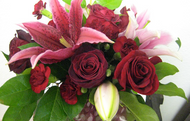 Rich Velvety Burgundy Blooms