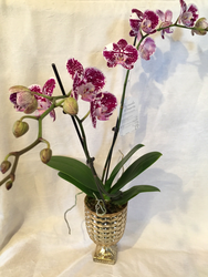 Gorgeous Orchid in Mercury Glass Urn