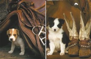 Cow-Pups Note Card Set