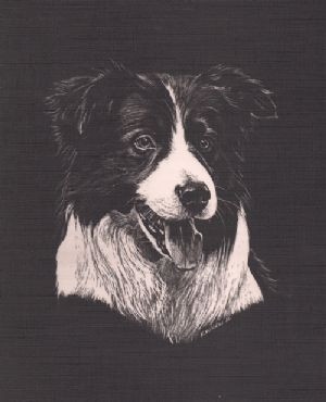Border Collie by Russell