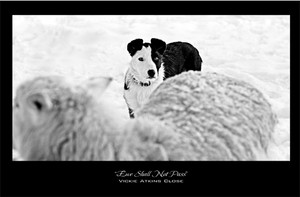 """""""Ewe Shall Not Pass"""" Note Card by Vickie Atkins Close"""