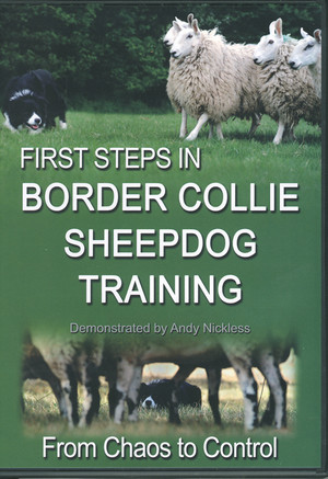 First Steps In Border Collie Sheepdog Training