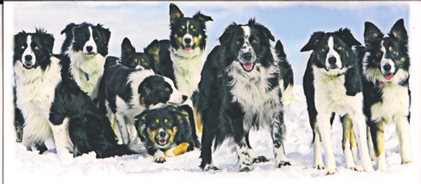 """""""Dogs in Snow"""" Note Card by Vickie Atkins Close"""