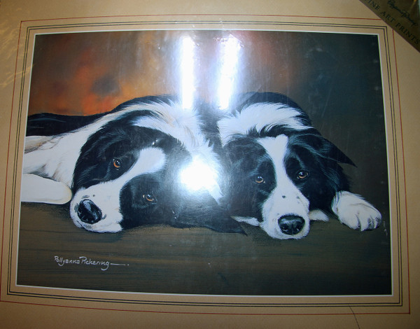 Border Collies Laying Print
