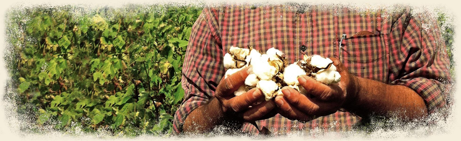 heritage-organic-cotton-maggies-ban1.jpg