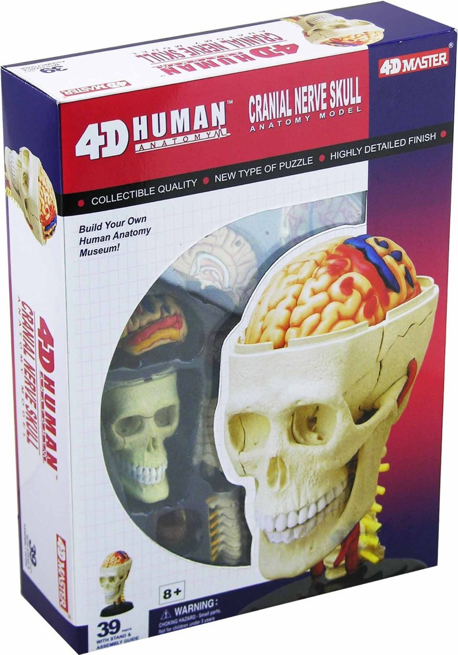Game Cranial Nerve Skull 26053 - Hobby Hunters