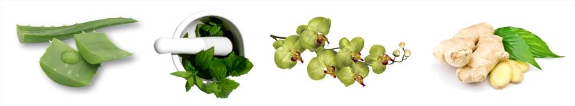 naturalingredients.png