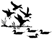 Duck Decoy Decal setting ducks md Wildlife Hunting Bird Stickers
