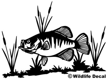 crappie and cattails decal md wildlife outdoors fishing wildlife decal rh wildlifedecal com Cartoon Crappie Fish Bluegill Fish Clip Art