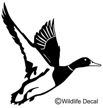 We have cool duck decals and window stickers. Pick your own color, text and size when ordering. Thank for shopping  www.wildlifedecal.com