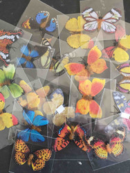 Butterflies, resin, asst colours, pk 5, Scrapify Australia