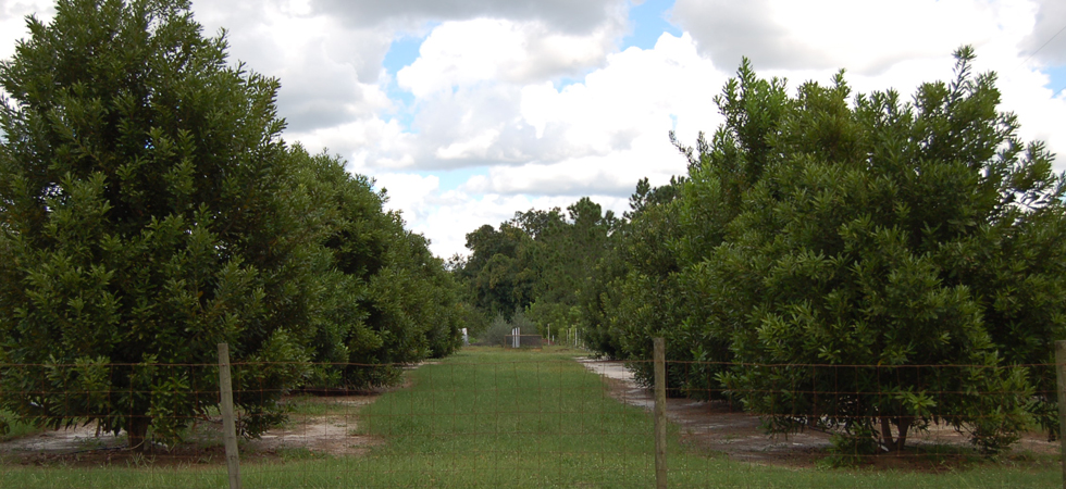 Florida Macadamia Growers Cooperative