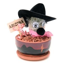 Arizona Cowgirl Cactus - 3.5 inch