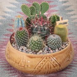 Southwest Cactus Garden - 9 inch