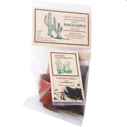 Saguaro Cactus Kit - in Mini Clay Pot