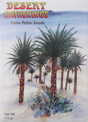 Date Palm Seeds