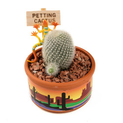 Petting Cactus Rainbow Sunset - 3.5 inch