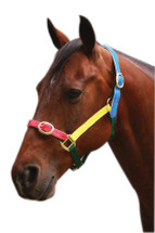 Multi ColouRed PVC Headstall