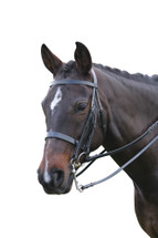 Oxford Flat Cavesson Show Weymouth Bridle