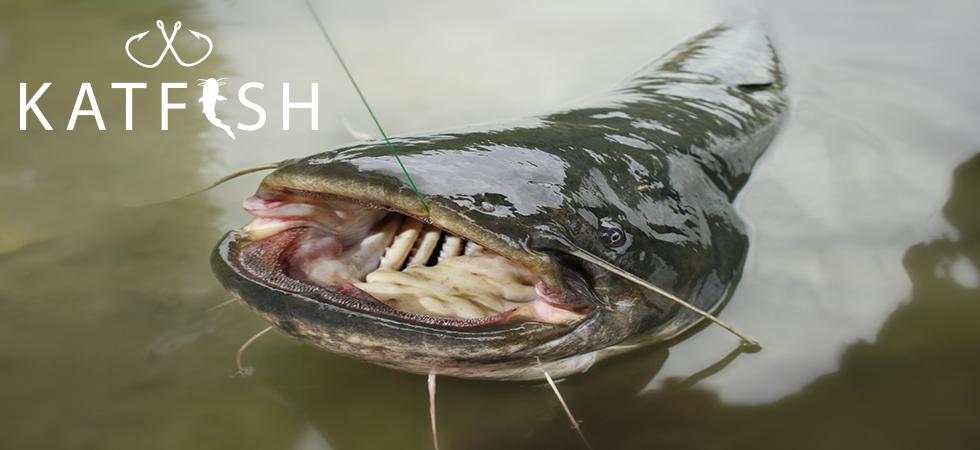 flatheadcatfish980x450withwatermark.png