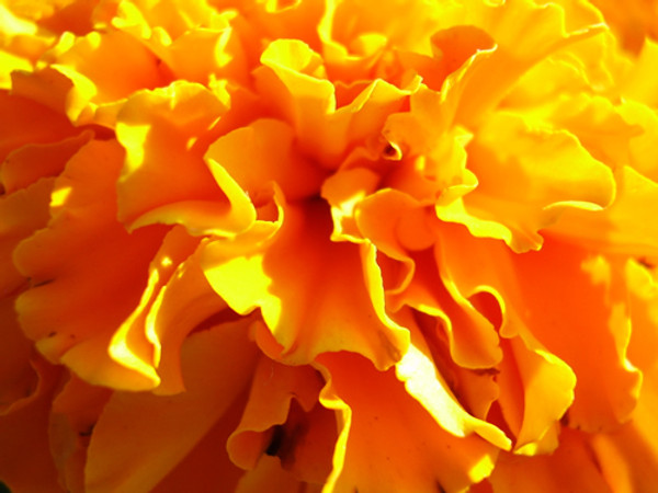 Calendula Benefits: A Plant with Skin Care Benefits