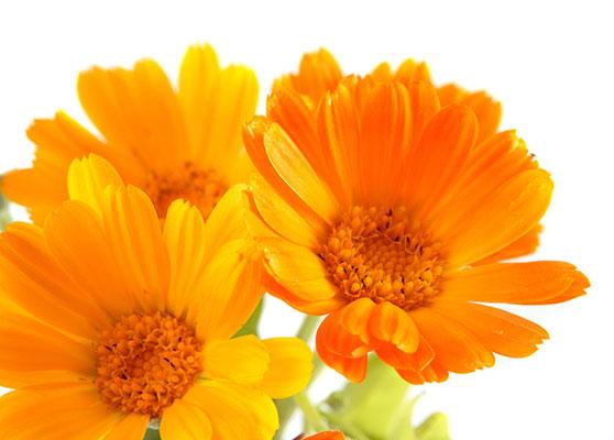 Paraben-free, Fragrance-free, Dye-free Skin Care cream