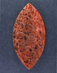 Multi-colored Dinosaur Bone Cabochon- Red and Orange  #15641