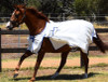 Summer Tearstop Paddock Rug sizes 6'9-7'3