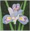Iris Flower Block