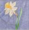 Jonquil Flower Block