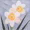 Narcissus Flower Block