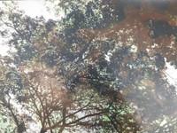 "Marucha (María Eugenia Haya) #2. ""Sol de mediodia,"" N.D. Print #2.  10.75 x 15.5 inches."