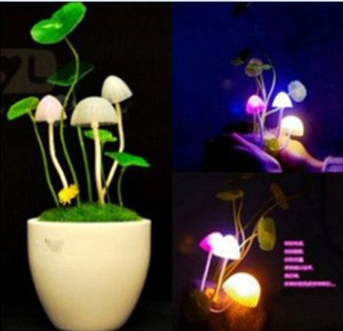 LED Night Light With Sensor - Plug in and it will turn on when it is dark(WXEV)
