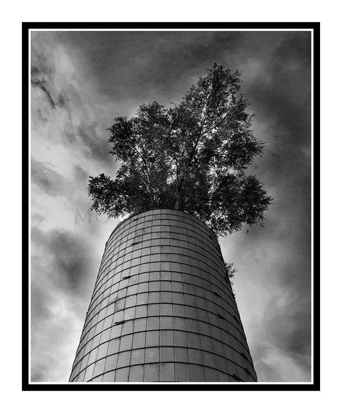 Tree Growing Out of a Silo, Colorado 2240 B&W