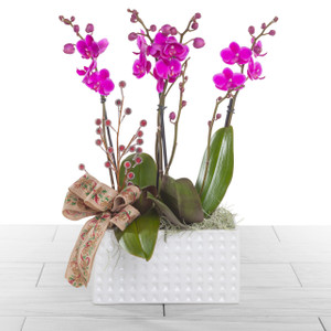 Orchid Peace | Holiday