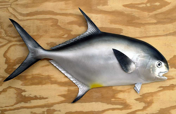 Permit 32 inch half mount fiberglass fish replica the for Fiberglass fish replicas