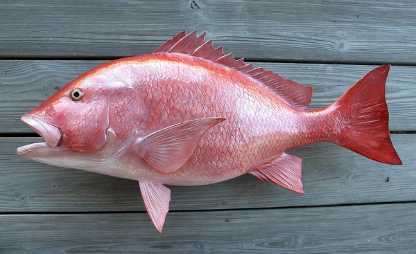 Red snapper 36 inch full mount fiberglass fish replica for Fiberglass fish replicas