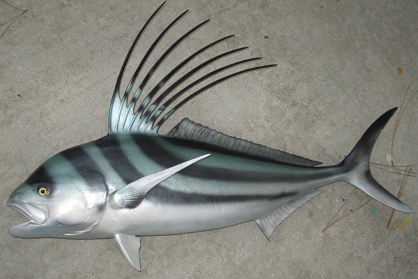 Roosterfish 51 inches full mount fiberglass fish replica for Fiberglass fish replicas