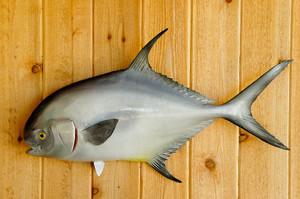 Permit fiberglass fish replica