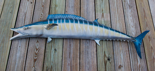 Wahoo 62 inch half mount fiberglass fish replica the for Fiberglass fish replicas