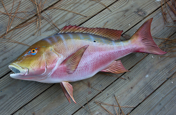 Snapper mutton 32 inch full mount fiberglass fish replica for Fiberglass fish replicas